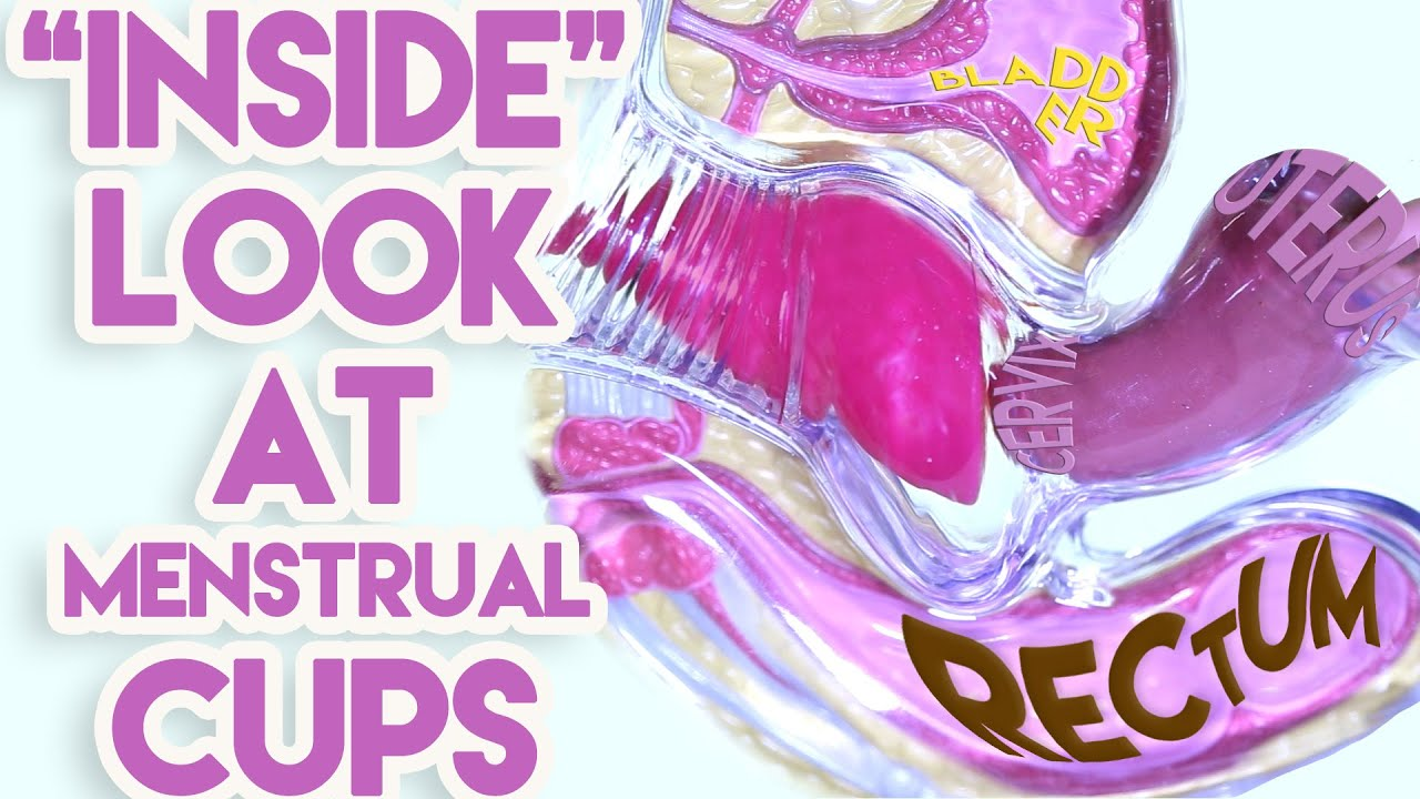 An inside look at menstrual cups youtube - Where to buy diva cup ...