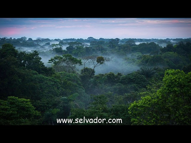 selvador - saying thank you for the rainforests