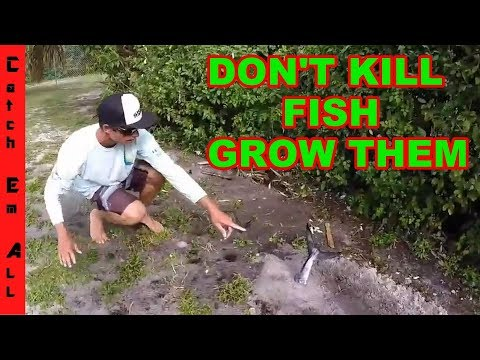 ORGANIC HOMEGROWN FISH! Don't Kill Fish Grow them!