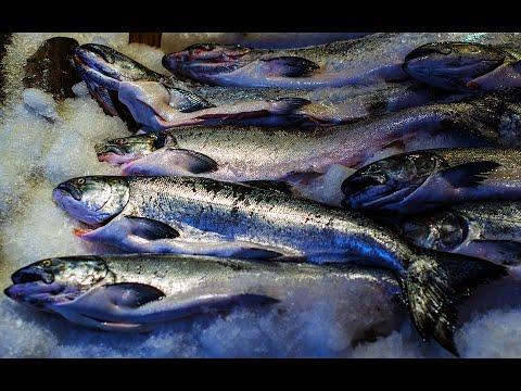 دراسة جديدة: الأسماك المجمدة لا تقل فائدتها عن الطازجة