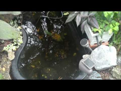 Small Aquaponics System with Airlift Pumps