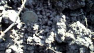 Metal Detecting Hunt In The Woods For Silver And Old Coins