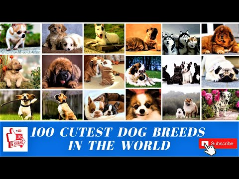 100 Cutest Dog Breeds In The World
