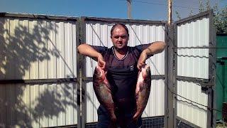рыбалка в Запорожской области(техника ловли толстолоба на планктон в Салтычие., 2016-10-24T12:15:49.000Z)