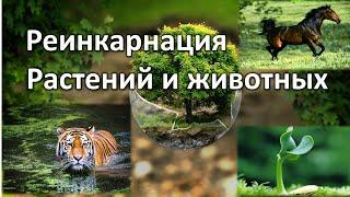 Реинкарнация животных и растений