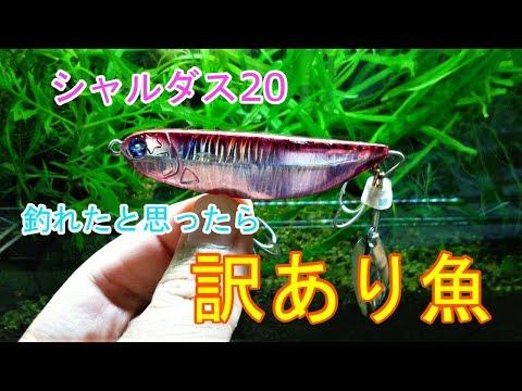 シーバス釣り #24 推察 : Seabass Fishing