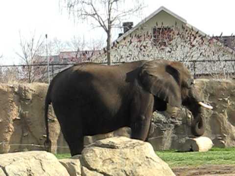 Swaying Elephant