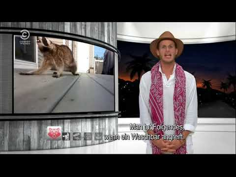 tosh.O! a Racoon, is it racist (?) and a dead moose