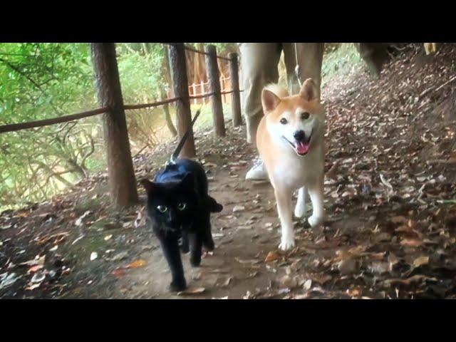 早朝パトロールを終えしばし休憩をとる警備隊 Morning walk with dog and cats