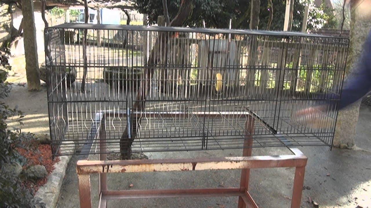 Pintar y reparar una jaula para canarios hd youtube for Jaulas para cria de peces