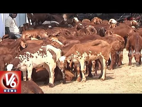 Special Story On Irregularities In Sheep Distribution In Telangana | V6 News