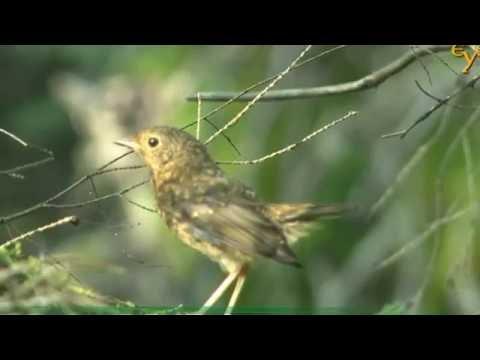 Птицы России Справочник Юный натуралист