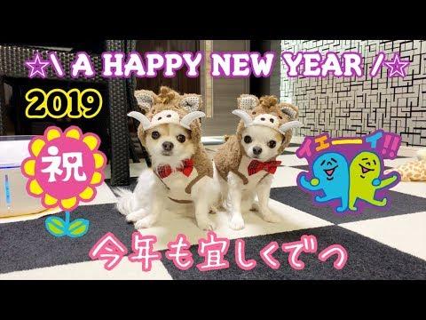 2019年皆様あけましておめでとうございます♪ 【かわいい】【犬】【chihuahua】【dog】【チワワ】