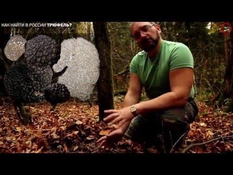 Как найти трюфель в лесу без свиньи