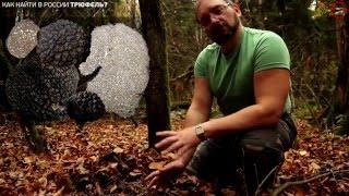 Российский трюфель - поиск с микологом Вишневским, www.grib.tv