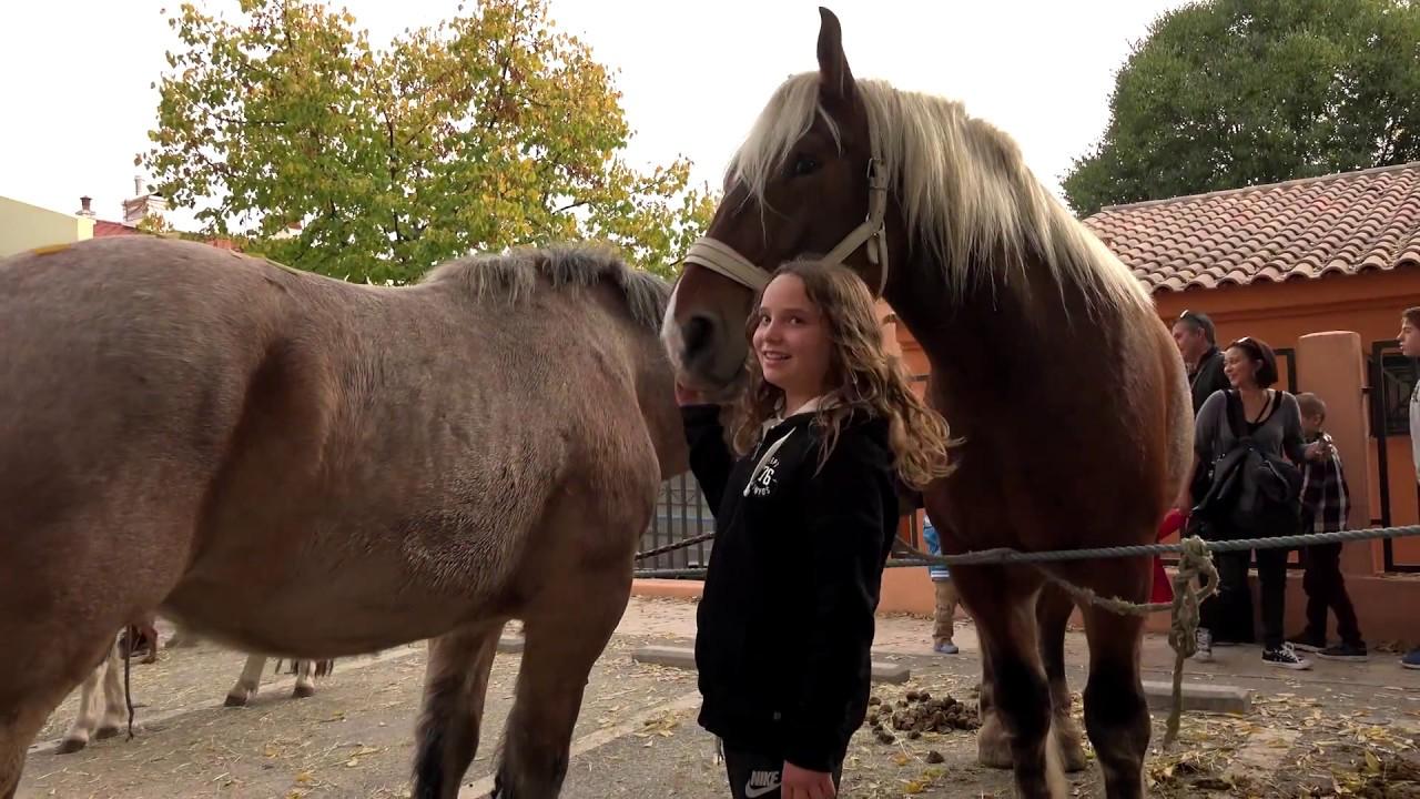 Top Gèmenos Ruralia 2015 les chevaux et le marché avec Bécaud shot on  NM97