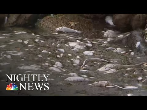 Toxic Red Tide And Algae Blooms Threatening People And Wildlife In Florida | NBC Nightly News