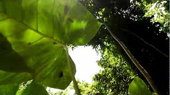 Kanopi House (treehouse) in Port Antonio, Portland Jamaica near Blue Lagoon