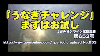 うなぎの捕食シーンを見たいっ!!【水中動画の定期更新No.653】