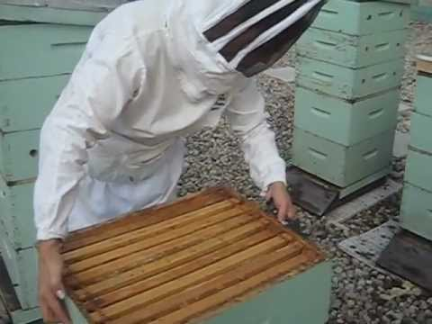 Beekeeping on the Fairmont Royal York (2012 Urban Agricultural Summit)