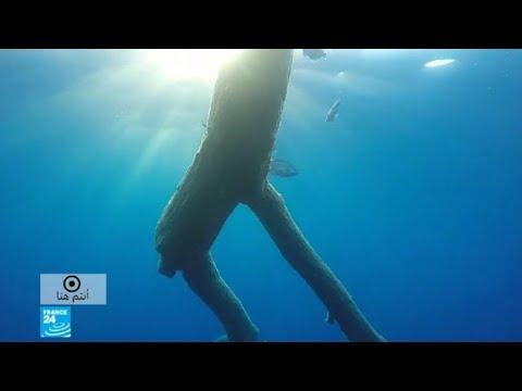 -پيلاغوس- ..بحر مقدس في الأبيض المتوسط  - نشر قبل 3 ساعة