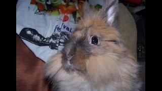 Мой декоративный  кролик Яша  принимает водные процедуры.( окт.2014)