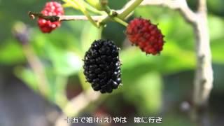 赤とんぼ うた:由紀さおり・安田祥子 作詞:三木露風 作曲:山田耕筰.