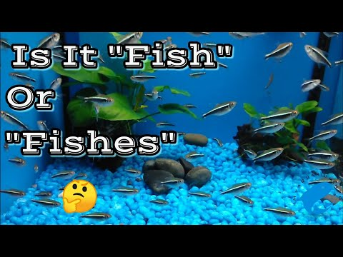 Is It Fish Or Fishes ? 🤷  - The Correct Way To Refer To Fish / Fishes