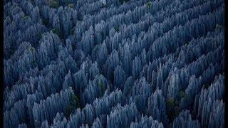 Супер-каменный лес на Мадагаскаре! Глобальный вопрос