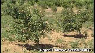 Organik Meyve Yetiştiriciliği - Organik Meyve Yetiştiriciliği.