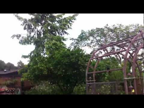 Touring Gorgeous South FL Living Color Garden Center - Part 1 of 3