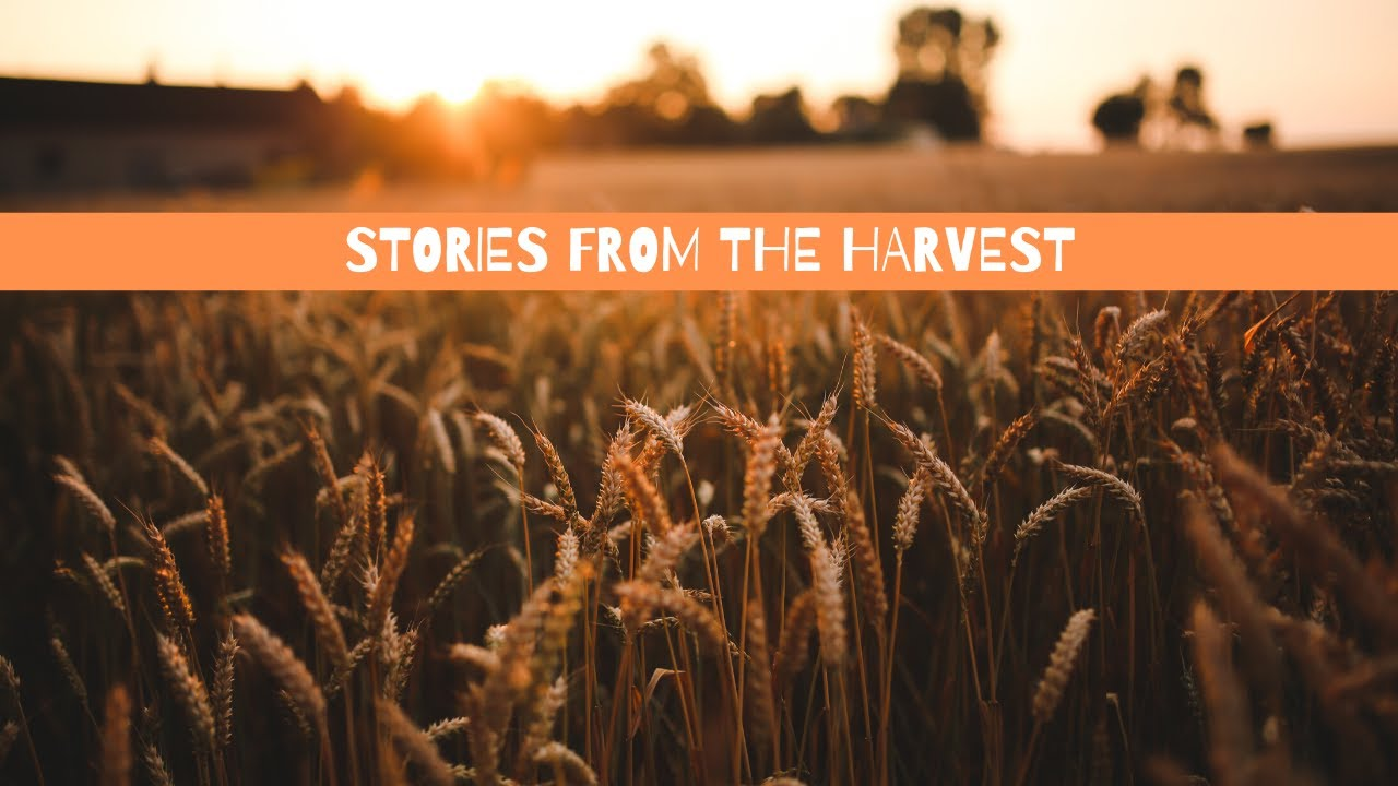 Stories from the Harvest | #NoPlaceLeft