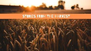 Stories from the Harvest | Roger Shull