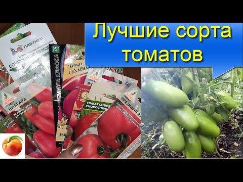 Лучшие сорта томатов Семена 2020 с результатом The best tomatoes сорти томатів Season 2020