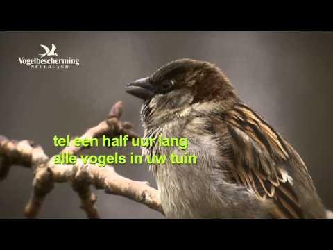 Tuinvogeltelling 2012: Huismus