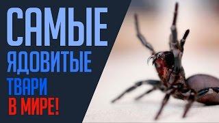 Самые ядовитые и опасные животные в мире
