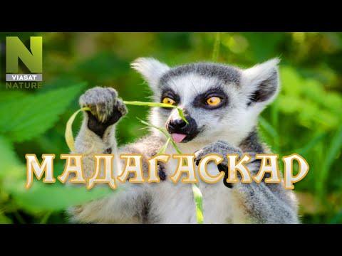 Мадагаскар. Удивительный мир природы, дикие животные. #Документальный фильм. Viasat Nature 12+ - Видео онлайн