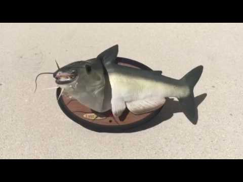 Cool catfish talking catfish youtube for Talking fish toy