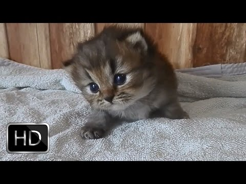 Little Kitten Meowing ( Very Adorable)