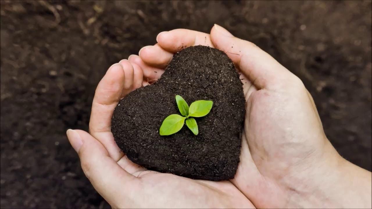Картинки по запросу Всемирный день почв