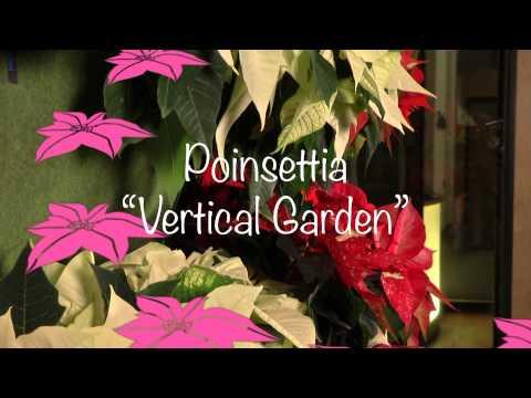 Idées de décoration pour les fleuristes : le poinsettia dans un Sky Planter et en jardin vertical