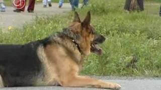 Управляемые собаки