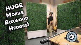 Making 5 Huge Boxwood Hedges