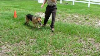 "German Shepherd ""poor Boy""  Brunswick Co Nc Animal Control"