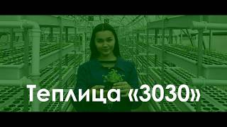 Аэропонная теплица 3030 - Конкурс Saby