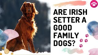 Are Irish Setter a good family dogs? | Are Irish setter dogs good with kids? |
