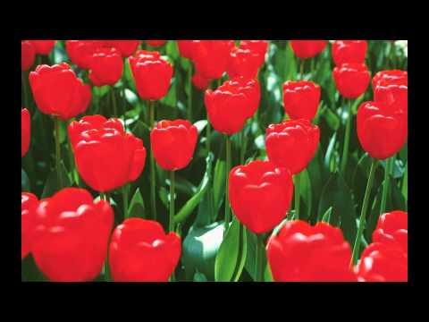 Tchaikovsky-Waltz Of The Flowers-Valse Des Fleurs-Valsul Florilor ( Video1080 FullHD ).mpg