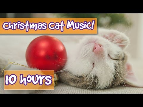 The Best Christmas Therapy Music for Cats! Calming Music for Cats with Classic Christmas Songs! 🎅🐱