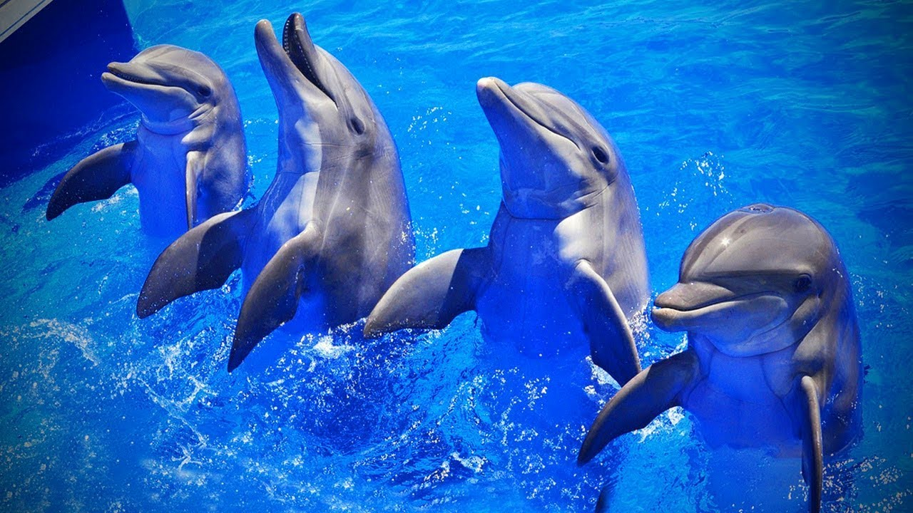 Good Dolphin Names