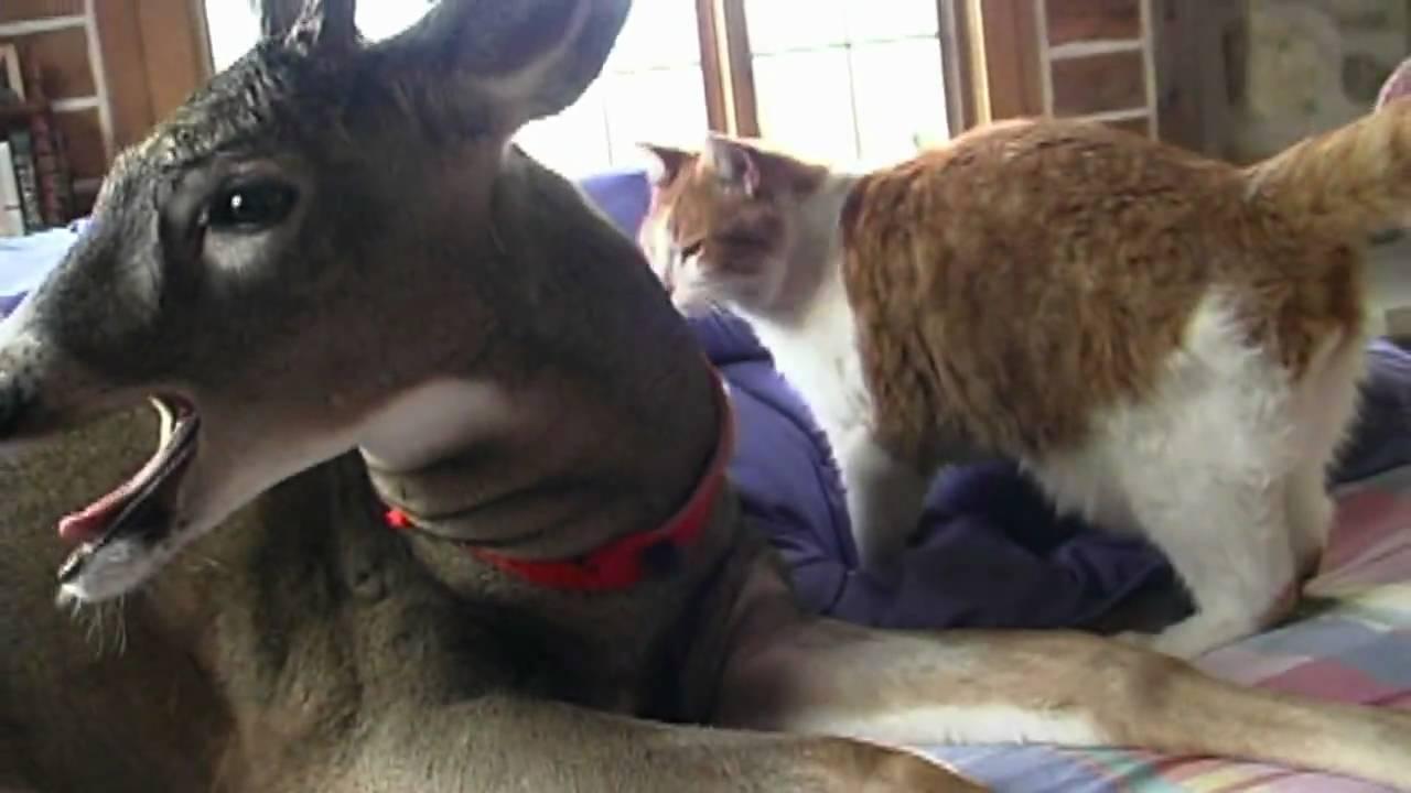 Pair hot how long do deer licks last perfect
